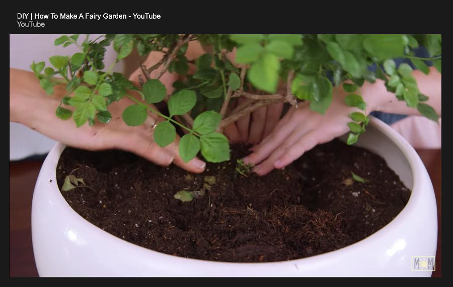 indoor fairy garden - plant first tree