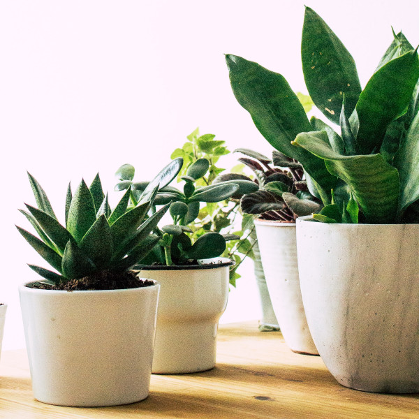 what are the best pots for succulents - succulent