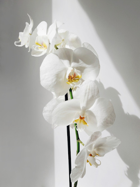 what are the best pots for orchids