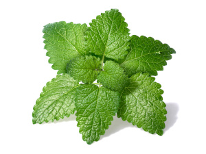 growing herbs indoors without sunlight - lemon balm