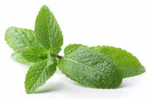 growing herbs indoors without sunlight - mint