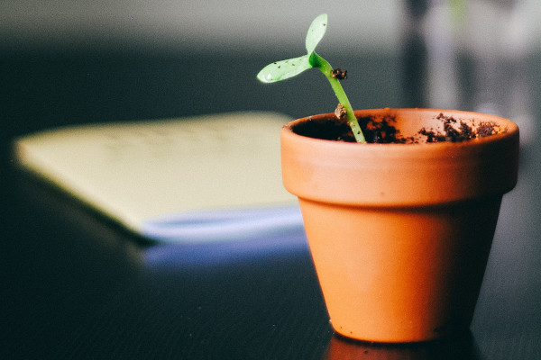 growing herbs in pots for beginners - the pot